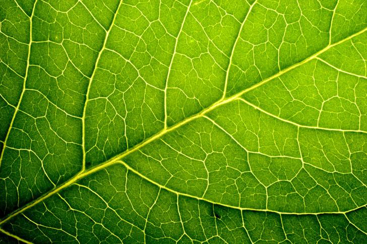 Leaf Program The Facts Sean Chu
